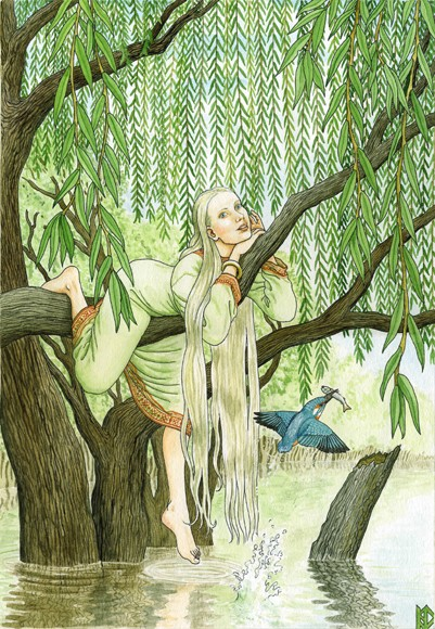 дерево верба