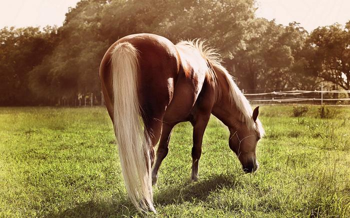 Біологічні особливості коня