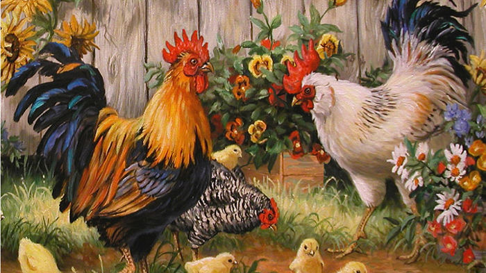 Історія одомашнювання свійської курки